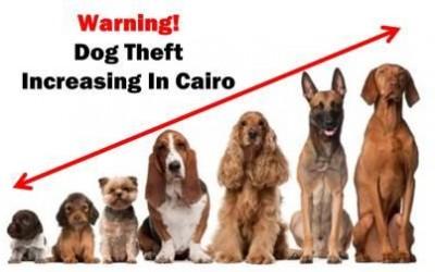 dog-theft-up