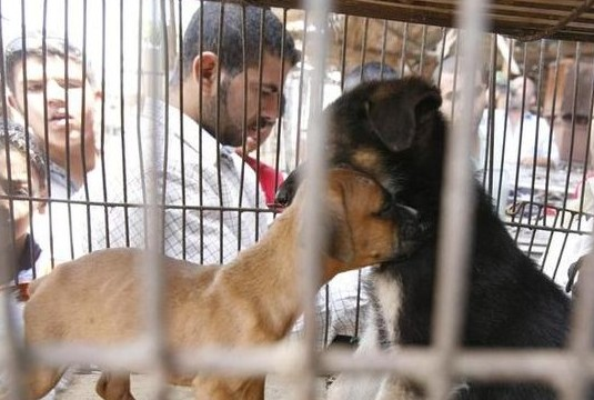 Puppies lie inside a cage at a stall selling dogs in a market in Cairo